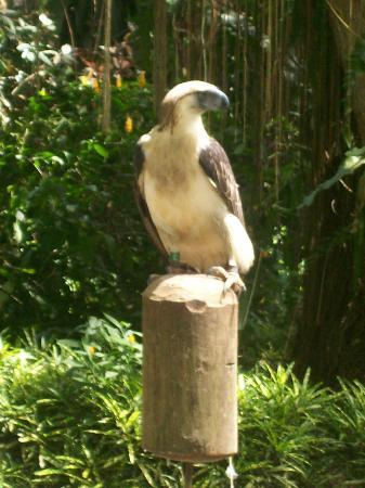 Davao City, Filipinas: Phil.Eagle