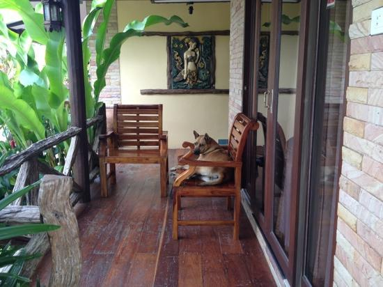 Seabreeze Hotel Kohchang: local dog likes our terrace too;)