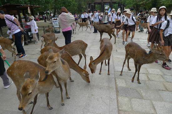 Парк Нара: More deers