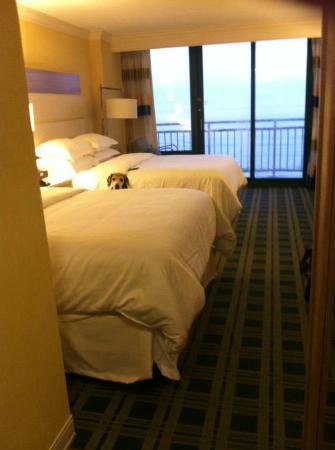Sheraton Oceanfront Hotel : Peek a boo!
