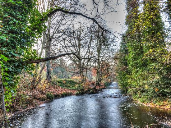 Rivelin Valley Nature Trail: The river at Rivelin