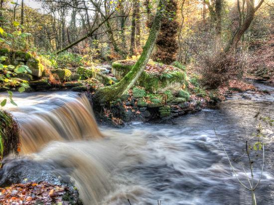 Rivelin Valley Nature Trail: Rivelin Valley