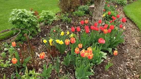 Windermere Lakeside Bed and Breakfast: Spring tulips