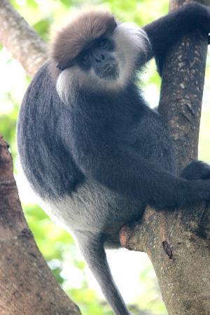 Hibiscus Villa: обезьяны