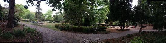 Waldorf Leura Gardens Resort: Pretty garden