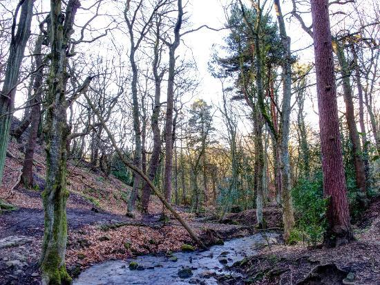 Ecclesall Woods: Limb Brook