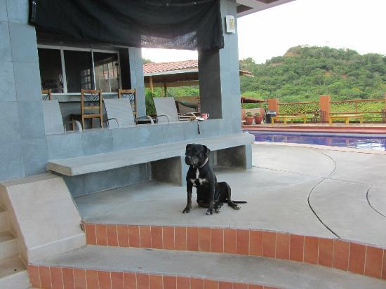 Casa Del Soul: The pool and adorable Chucho dog