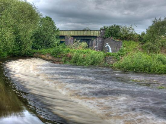 Five Weirs Walk: One of the Weirs - how did that fish get there?