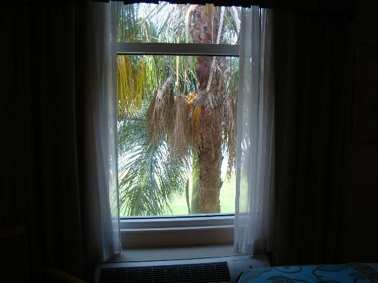 Home2 Suites by Hilton Miramar Ft. Lauderdale: Even the tree didn't block out the noise !