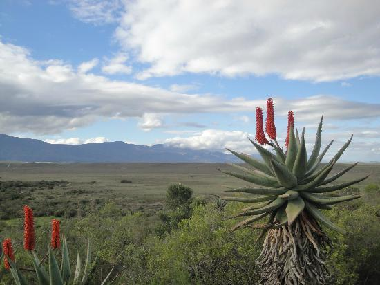 Augusta de Mist Country House: Bontebok National Park