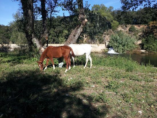 La Calma de Rita: El rio frente a la casa y los caballos