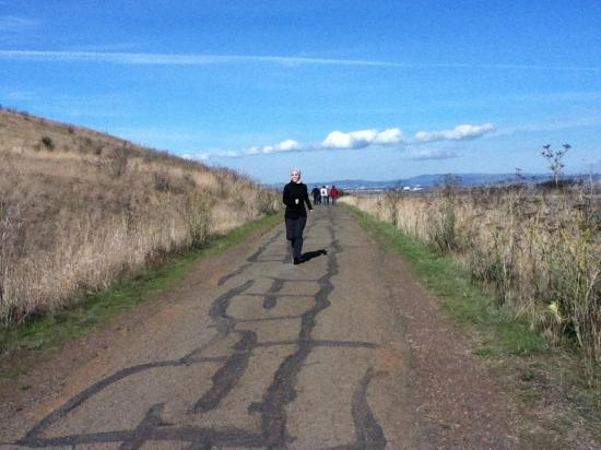 Coyote Hills Regional Park: Coyote hill trail