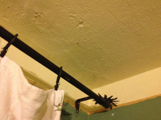 B&B La Torretta di Sotto: ragnatela con ragno