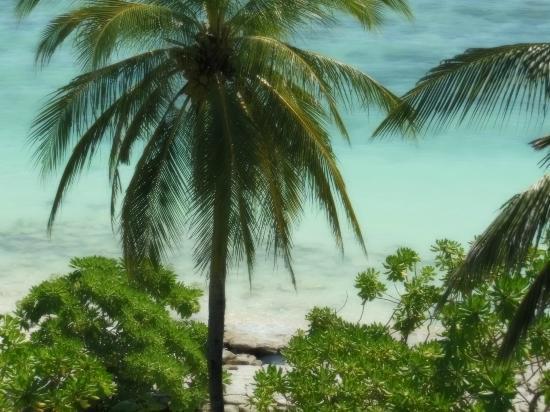 Fern Boquete Inn: praia