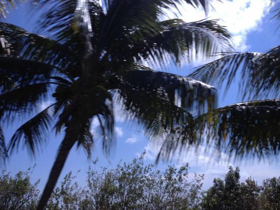 Dreams Riviera Cancun Resort & Spa: pool view