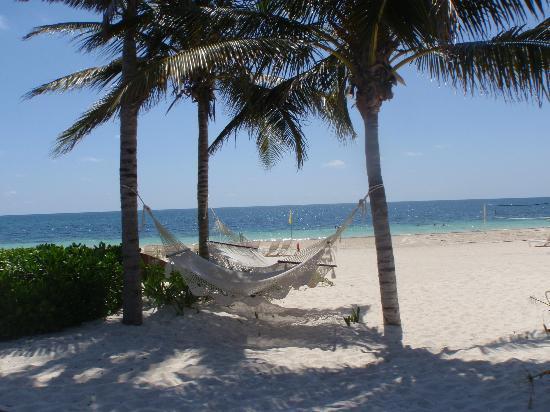 Dreams Riviera Cancun Resort & Spa: hammoc near pool