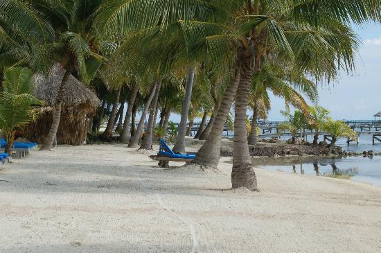 Pelican Reef Villas Resort: beach area