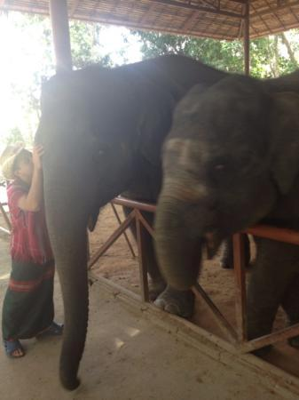 Centara Karon Resort Phuket: elephants we met on the trip
