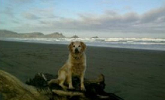 Catlins Retreat Guest House: Our dog Jade