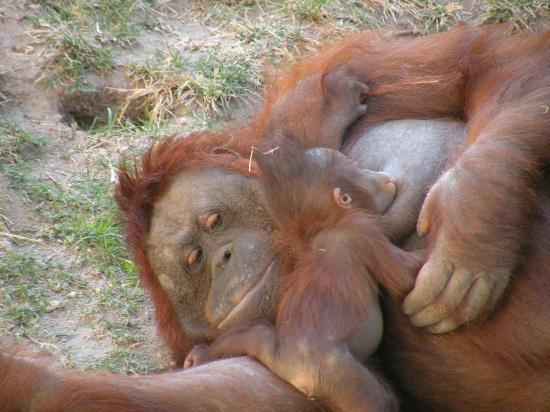 Zoologico Guadalajara: Quelle humanité dans son regard