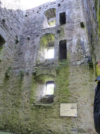 Carnasserie Castle : Nature reclaiming stone
