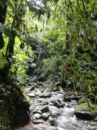 باكوار لودج: Walk to waterfall 