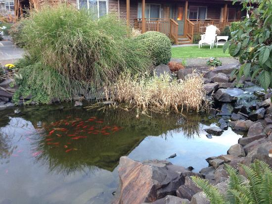 Inn at Cannon Beach: Koi pond at the hotel