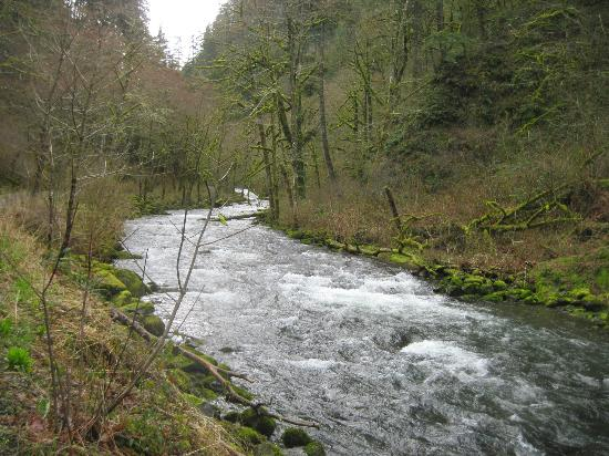 Salmon River Trail: salmon river 742