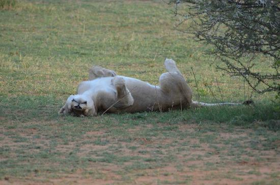 Marataba Safari Lodge: Having a snooze