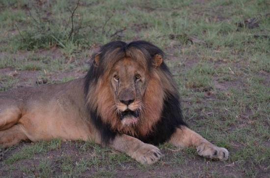 Marataba Safari Lodge 사진