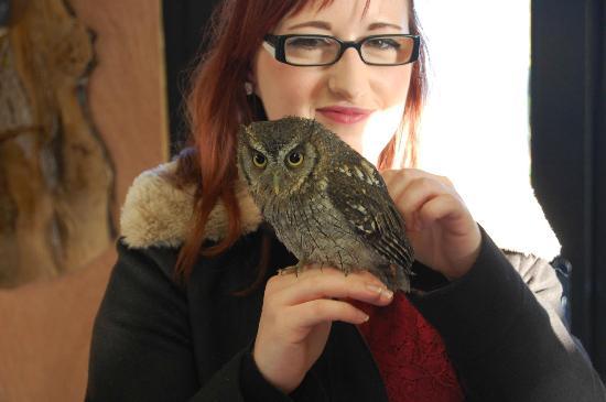 Woodlands Falconry and Bird of Prey Centre.: Burrowing Owl