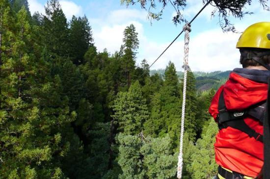 Sonoma Canopy Tours: The view from the end of the longest line