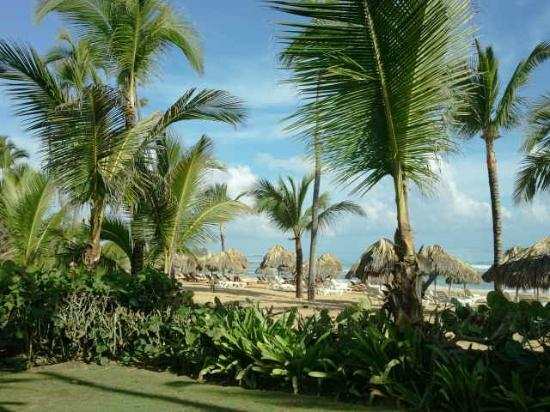 Excellence Punta Cana: Beach area