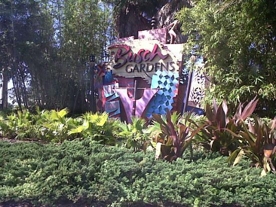 Serengeti safari Picture of Busch Gardens Tampa Tampa TripAdvisor
