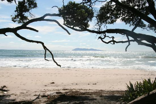 Waihi Beach Lodge: uner the trees at Orokawa Bay - image Barry Jesney