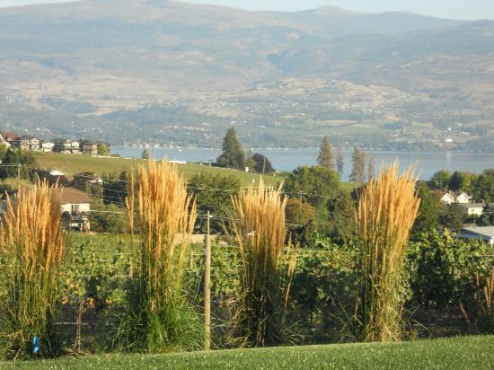 De Rosa Vineyard Bed and Breakfast: Over looking the vineyards and Okanagan Lake