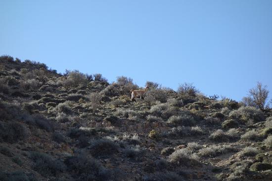 El Camino de las 365 Curvas: Some Alpacas