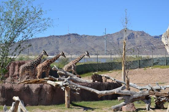 Foto de el paso zoo el paso el paso zoo tripadvisor - La hora en el paso texas ...