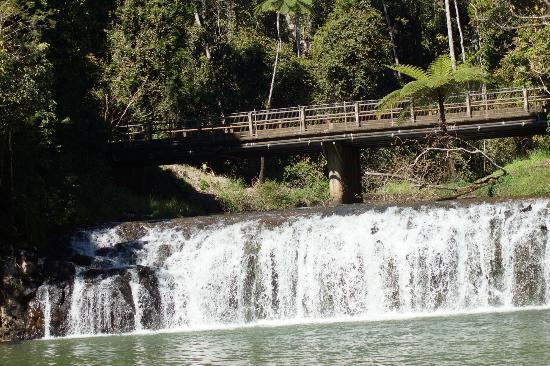 Malanda Falls Caravan Park: Malanda Falls adjacent to CP