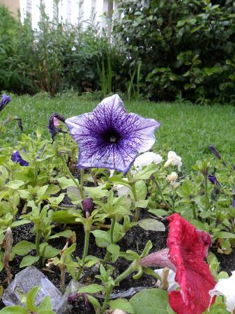 Antiguo Solar: Jardin