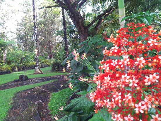 Hale Moana Bed & Breakfast: Garden beauty