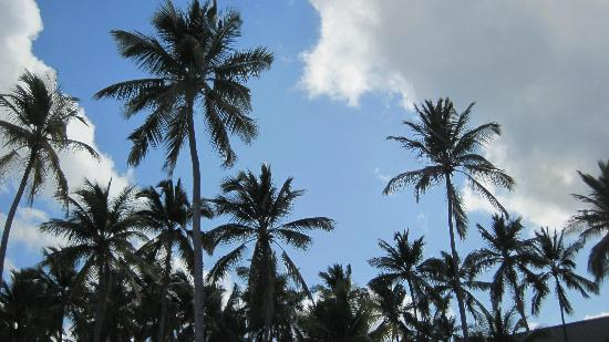 Barcelo Bavaro Beach - Adults Only: look up!