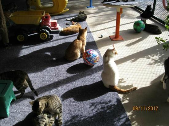Barut Lara: Lovely cats in their house