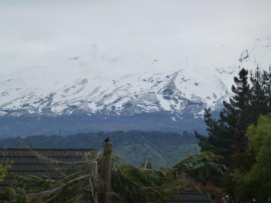 Manuka Lodge: Ruapehu from driveway