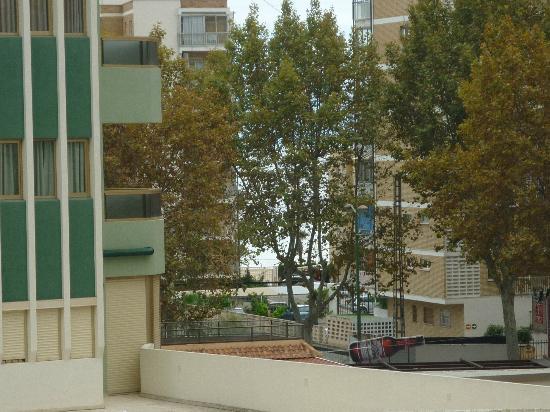 El Trebol: you can see the sea through the trees
