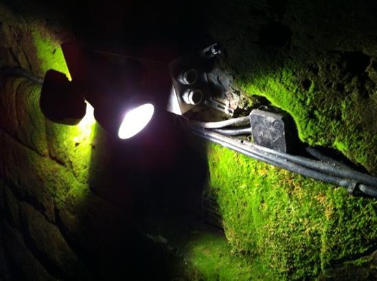 Praetorium: Moos in elf Metern Tiefe