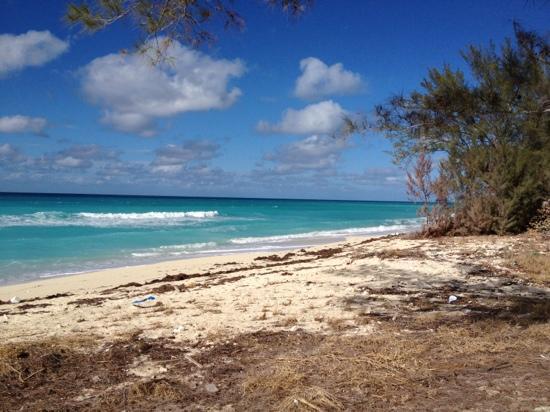 Sherry's Paradise Beach Bar: Sherri's view