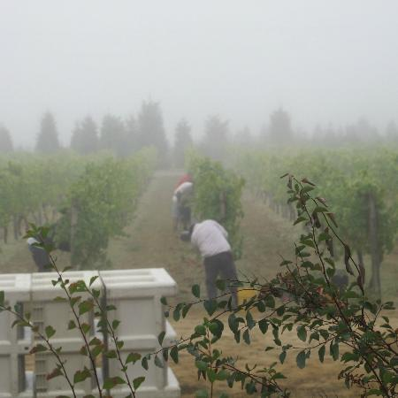 Joseph Mattey House: Jack & crew picking grapes