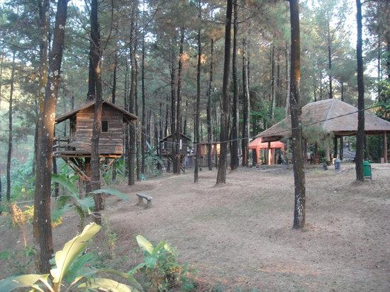 Pasuruan, Indonesia: treehouses :)
