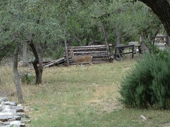 The Homestead Cottages: Wildlife everyday